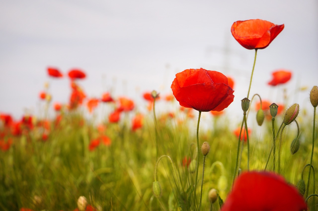 Lest We Forget to Honour the Past